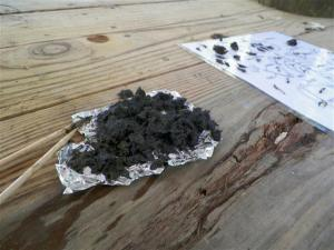Owl Pellet and chart